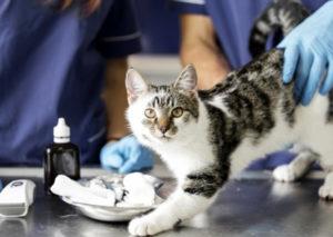 Read more about the article Stérilisation des chats libres : la commune au rendez-vous !